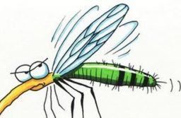 Szúnyoggyérítés a kerületben 28-án
